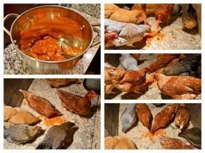 ChickensCollage