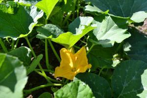Garden15-10