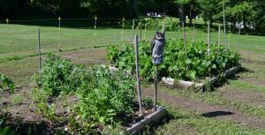 Garden15-13