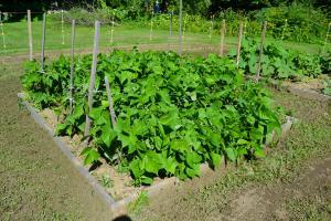Garden15-7