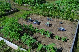 Garden15-9